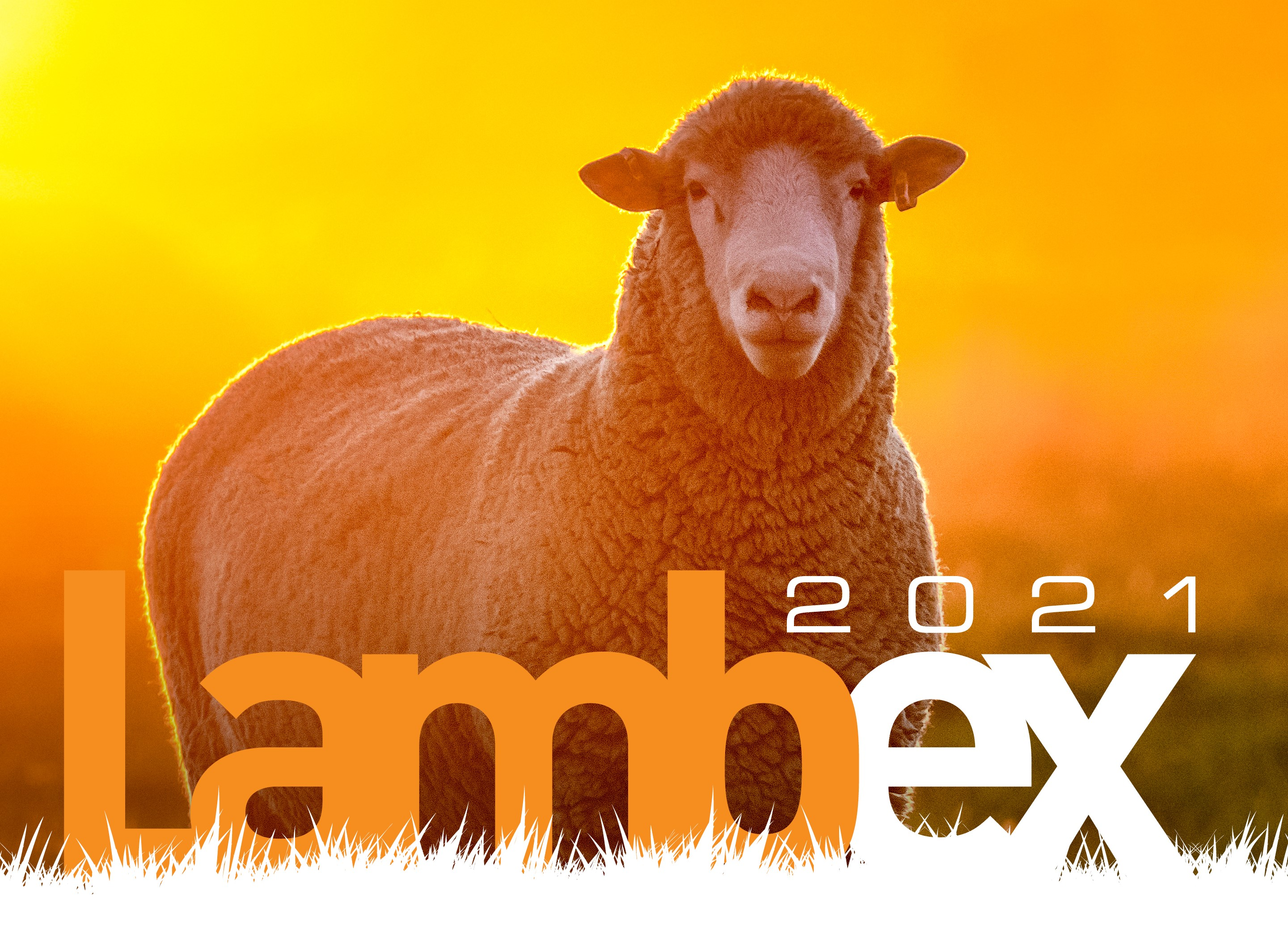 LambEx-2021-Website2